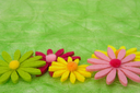 Spring background. Flowers on green sisal background, selective DOF.