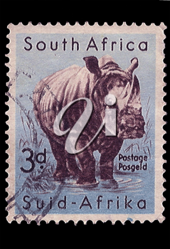 Royalty Free Photo of a White Rhinoceros Stamp