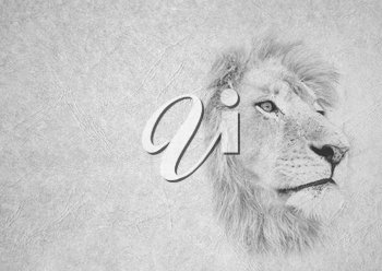 Greyscale Black and White Foldable Card Image of Lion Face Staring into Distance on  Leather Type Textured Paper with Heading and Large Text Area
