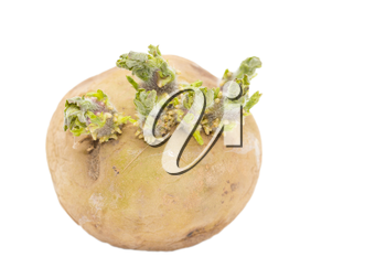 old potatoes on a white background
