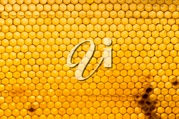 honey comb with honey as a background .
