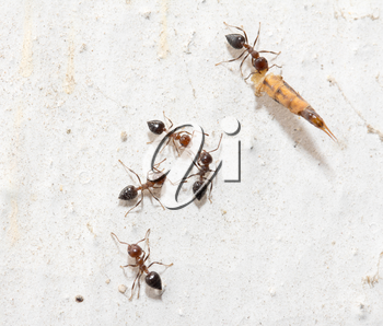 ants on a white wall. macro