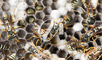 Wasps on comb