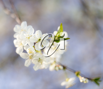White flowers on a tree