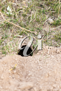animal burrow in the ground