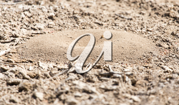 Close-up image of anthill in soil