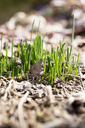 young grass in the ground outdoors