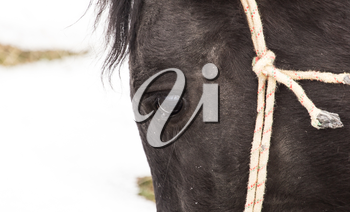 Portrait of a horse on nature in winter