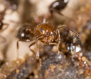 little ant in nature. macro