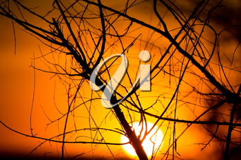 Silhouette of tree branches at the golden sunset .