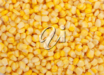 Royalty Free Photo of a Bunch of Corn