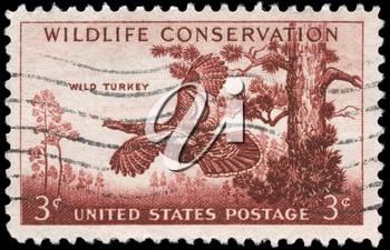 Royalty Free Photo of 1956 US Stamp Shows the Wild Turkey, Wildlife Conservation