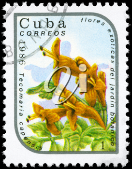CUBA - CIRCA 1986: A Stamp printed in CUBA shows image of a Tecomaria capensis, from the series Exotic flowers in the Botanical Gardens, circa 1986