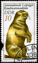 GDR - CIRCA 1982: A Stamp printed in GDR shows image of a Marmot from the series