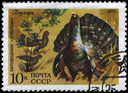 USSR - CIRCA 1975: A Stamp printed in USSR shows image of a Wood Grouse with the inscription