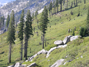 Royalty Free Photo of a Treeline in the Sierra Nevada