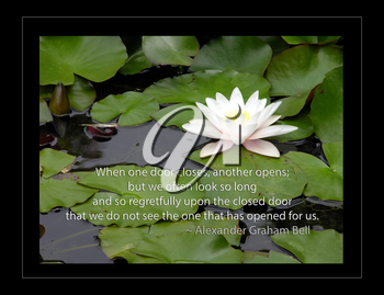 Royalty Free Photo of a Waterlily