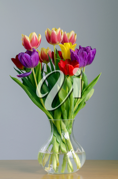 Still life portrayal of brightly colored tulips in a glass vase