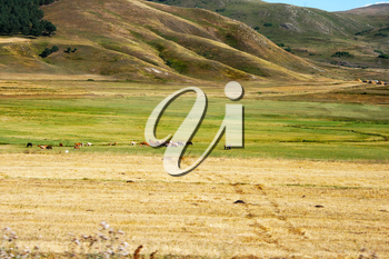 Royalty Free Photo of Animals in a Pasture