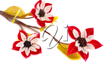Red dried flowers isolated on white background.