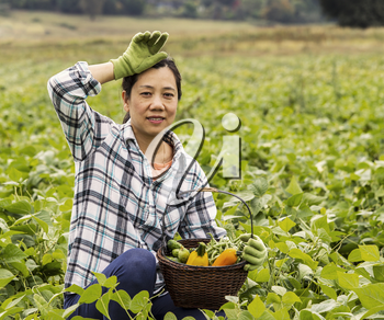 Mature women taking break from harvesting Green beans in Field