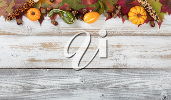 Autumn foliage with gourds, corns and acorns for Thanksgiving and fall holidays. Top border background with plenty of copy space