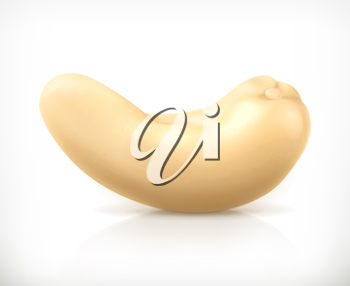 Cashew nuts, vector icon