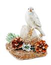 Christmas arrangement of bird on a nut with cones, pine needles and snowflakes isolated on white background