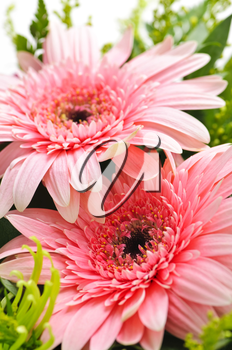 Close up of floral arrangement with pink gerberas
