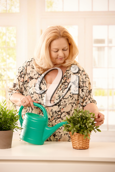 Smiling senior blond woman watering green potted plant from sprinkling can.