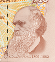 Pound currency background, close-up - 10 Pounds