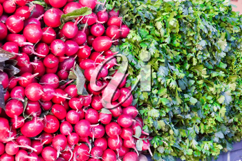 Photo of background fresh radish and foliage