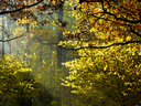 sun rays through foliage in autumn forest
