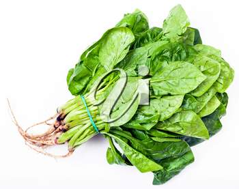 bunch of fresh green spinach herb on white background