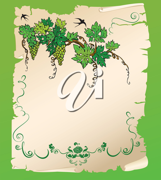 Hand drawn Branch of grapes on old paper scroll. Design for menu or wine label