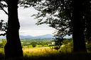 View of the Irish landscape seen through two silhouetted trees