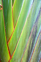 rear of a leaf and the light line veins and concept background