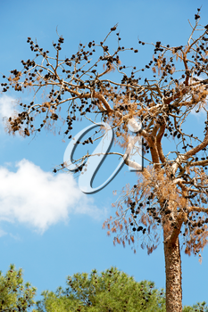 the sky light background   tree  and branch