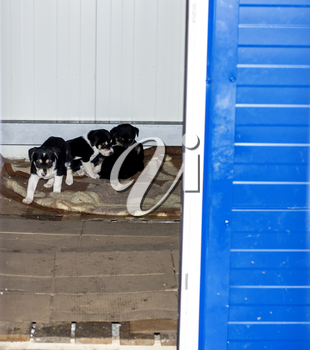 puppies gathered in a bunch in his house in the shelter, animal shelter, dog rescue, volunteer work
