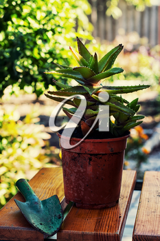 Transplant and care for house plants in spring