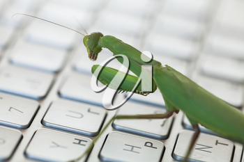 Software bug metaphor, mantis walks on a laptop keyboard