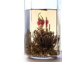 Green Chinese flower tea is brewed in the glass above white background