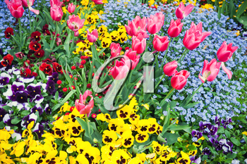 Colorful decorative flowers, garden flowerbed. Background photo with selective focus