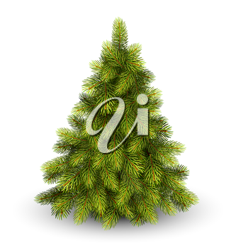 Christmas Tree Pine Isolated on White Background