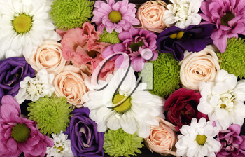 Beautiful coloful daisy and rose flowers for background