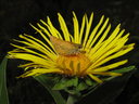 Butterfly on a flower drinking nectar. Insect pollinators.