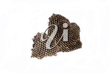 The nest of wasps with honey in the honeycomb cells. Isolate on white background.