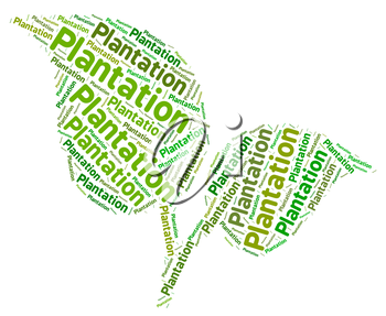 Plantation Word Showing Farmed Plantations And Agricultural