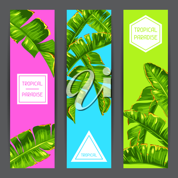 Banners with banana palm leaves. Decorative tropical foliage.
