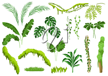 Set of jungle plants. Tropical leaves. Woody natural rainforest.